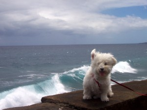 dog in storm thyka