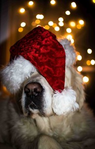 dog training tips at Christmas