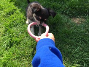 low res Beco hoop Bruno tug and release game
