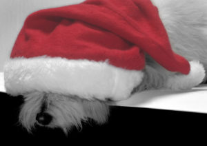 sleepy-sally-xmas-1360850-639x450