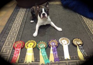 hugo rosettes ready steady dog